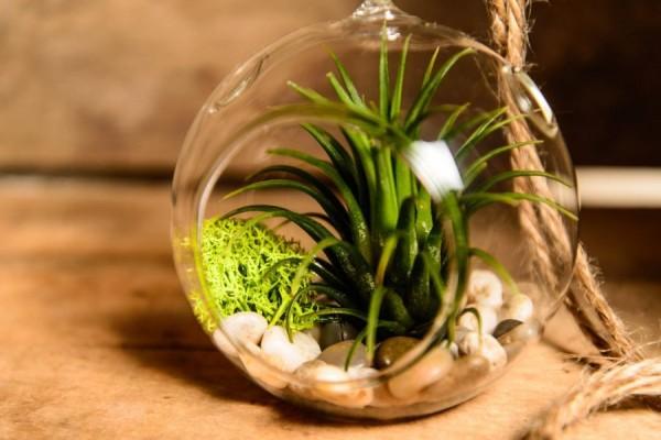01 hinterland plant terrarium