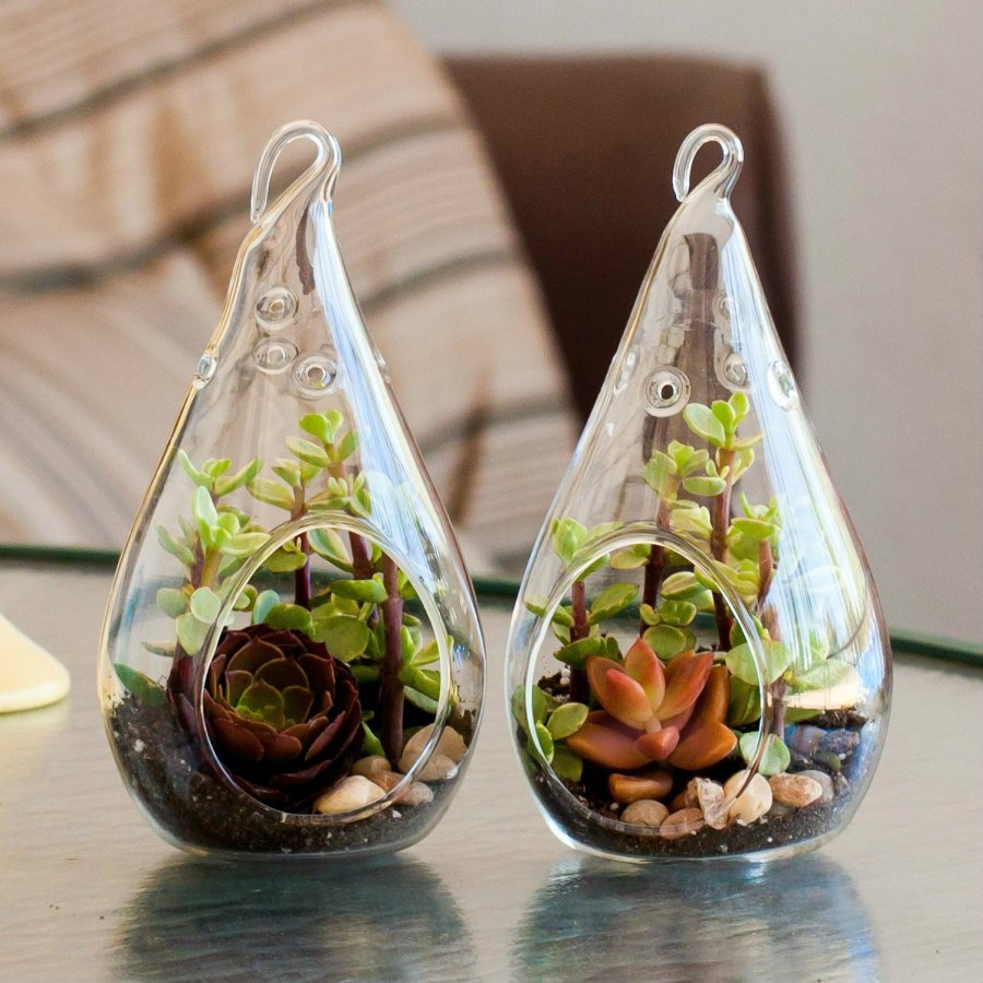The Best Plant Terrarium To Buy Right Now Ranking Squad
