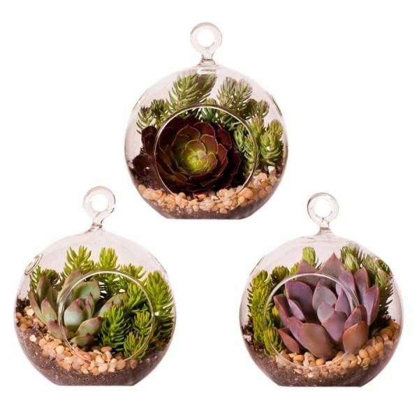 03 trio plant terrarium