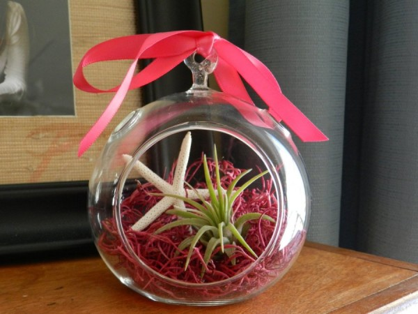 04 tillandsia terrarium houseplant