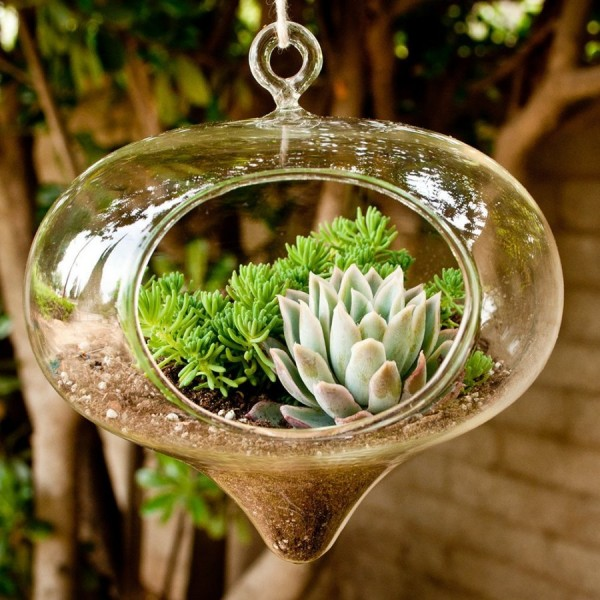 05 gorgeous tear drop plant terrarium