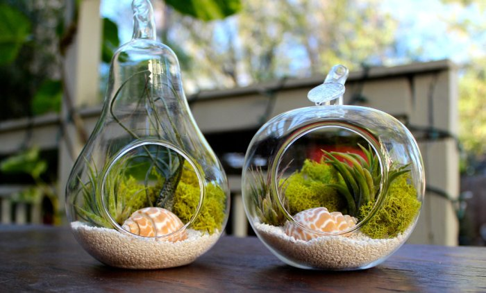 The Best Plant Terrarium to Buy Right Now