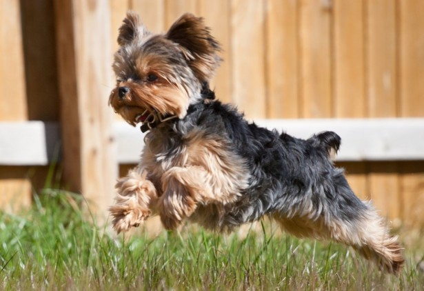 05 dogs breeds for depression