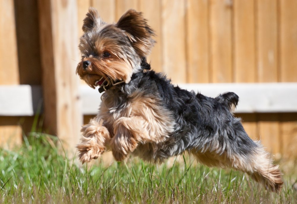 Top 5 Dog Breeds To Help You Fight Depression Ranking Squad