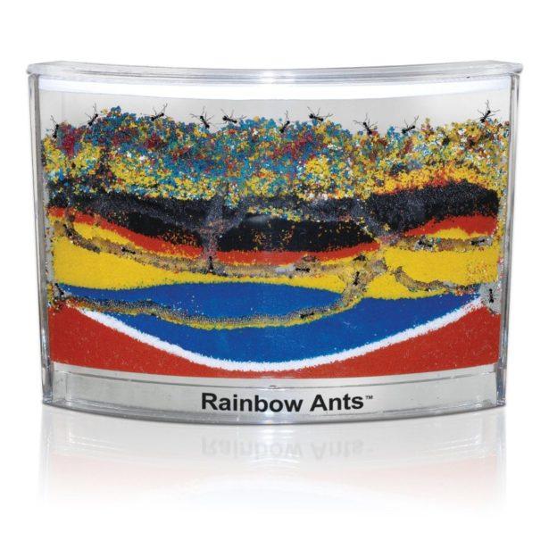 02 rainbow ants