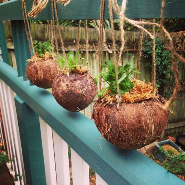 Coconut shell flower pot