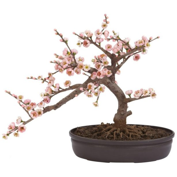 best bonsai trees 08