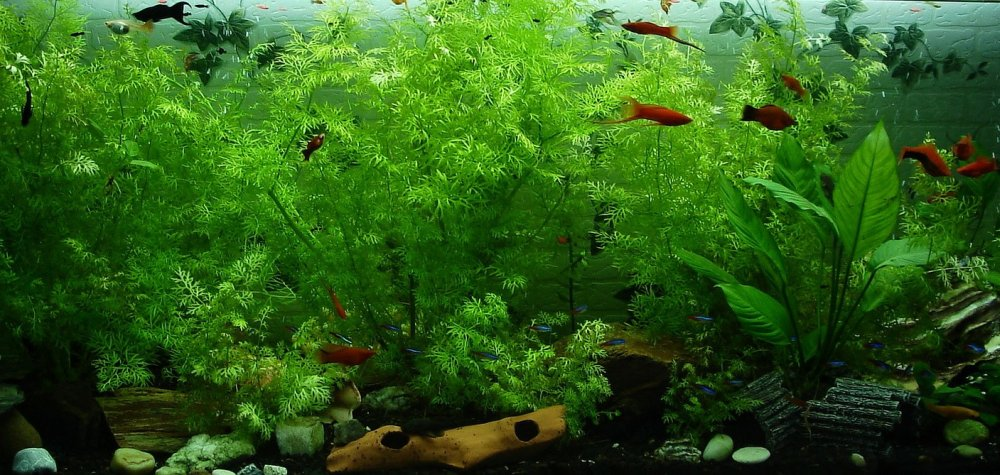 10 Best Algae Eaters for Freshwater Aquariums